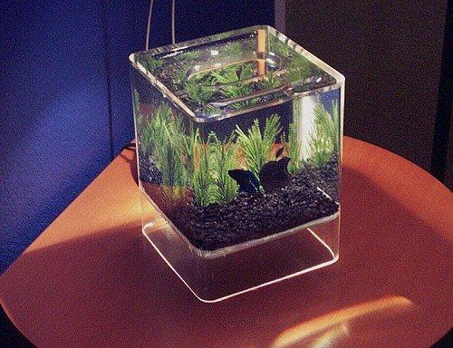 нано аквариум. акула в аквариуме. мутная вода в аквариуме. аквариум 25...